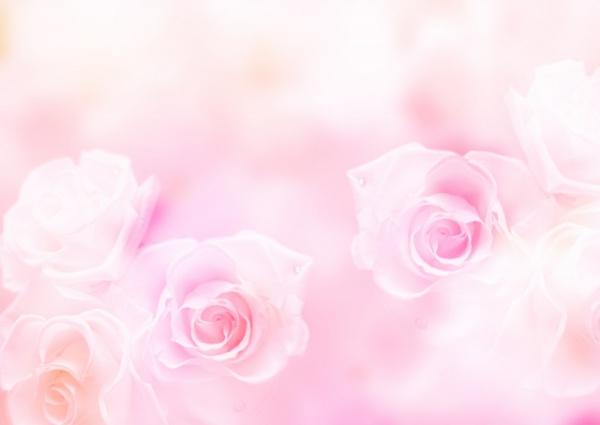 ピンクのバラ(感謝)
